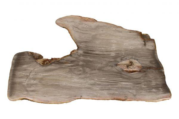 Couchtischplatte aus versteinertem Holz CP-09 - top view
