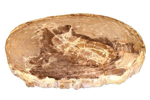 Couchtischplatte aus versteinertem Holz CP-20 - top view