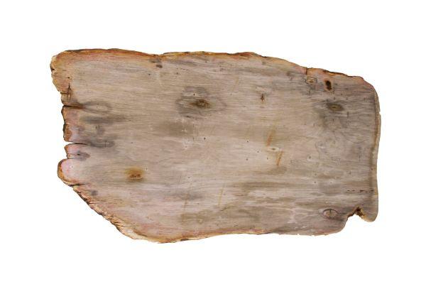 Couchtischplatte aus versteinertem Holz CP-08 - top view