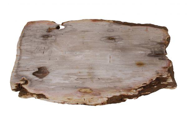 Couchtischplatte aus versteinertem Holz CP-07 - top view