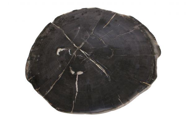 Couchtischplatte aus versteinertem Holz CP-10 - top view