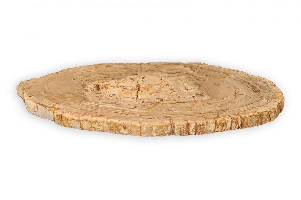 Versteinertes Holz Couchtisch Platte - Gila - Länge 108 cm - front view1