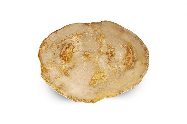 Versteinertes Holz Couchtisch Platte - Namib - Länge 78 cm - top view1
