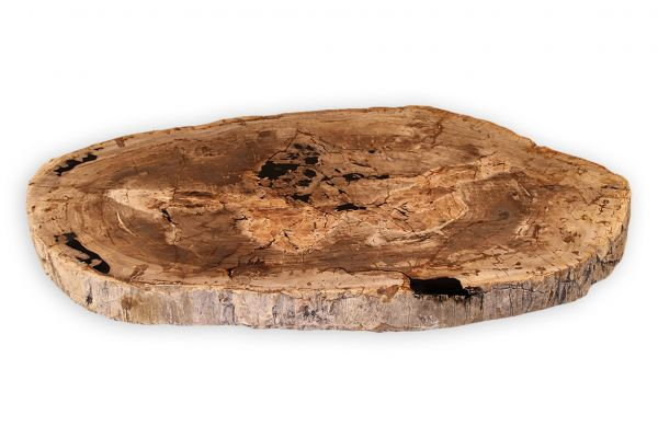 Versteinertes Holz Couchtisch Platte - Sonora - Länge 136 cm - front view1