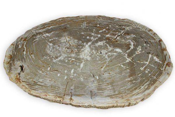 Versteinertes Holz Couchtisch Platte - Ätna - Länge 109 cm - front view1