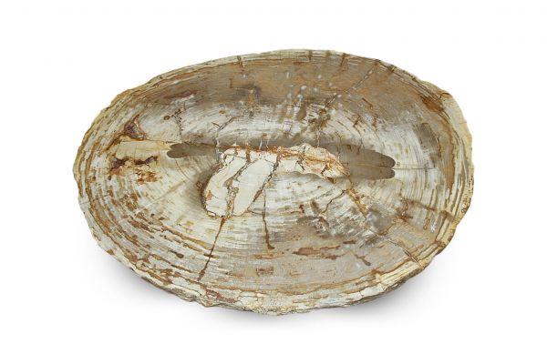 Versteinertes Holz Tisch - Talak - Länge 97 cm - front view1