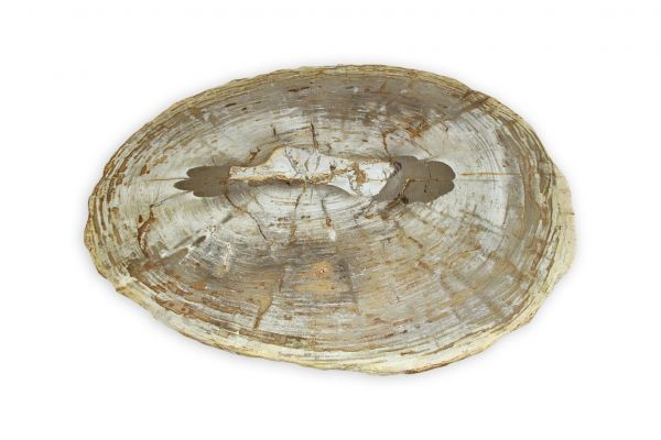 Versteinertes Holz Tisch - Tirich Mir - Länge 97 cm - front view1