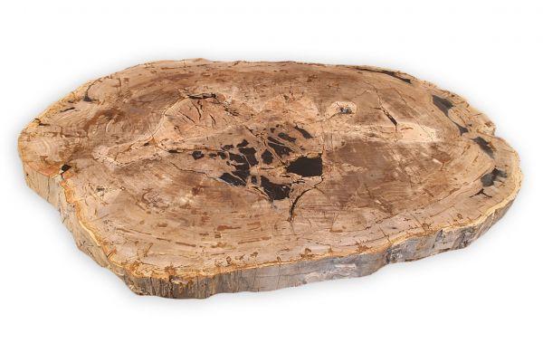 Versteinertes Holz Tischplatte - Kalahari - Länge 136 cm - front view1