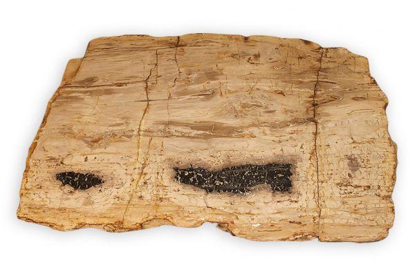 Versteinertes Holz Tischplatte - Pinnacles - Länge 131 cm - front view1