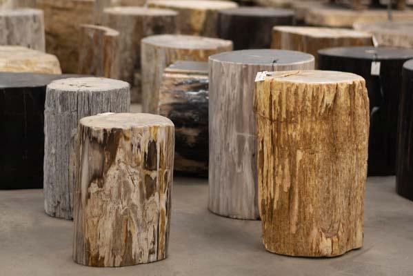 Beisteller Versteinertes Holz